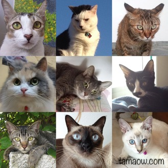 Cats who have participated in this project